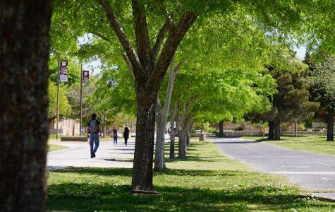Aggressive birds return to NMSU campus