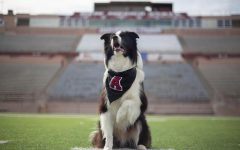 Striking the Wonder Dog: The state of New Mexico's goodest of boys