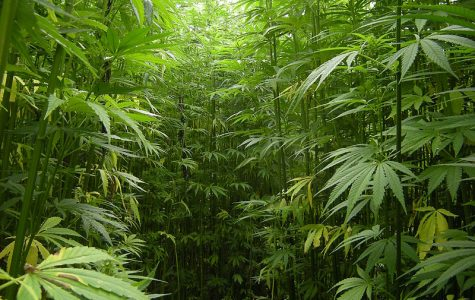 NMSU rings in new year with Hemp production approval