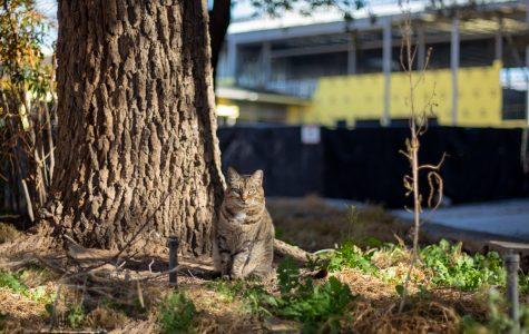 NMSU organization decreases feral cat population on campus