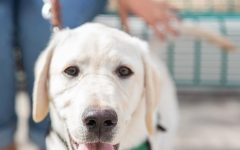 NMSU Community Puppy Raisers Club partners with non-profit to train seeing-eye dogs