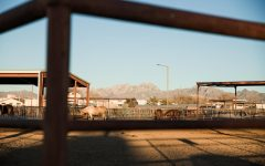 Concern surfaces for NMSU livestock amid COVID-19 restrictions