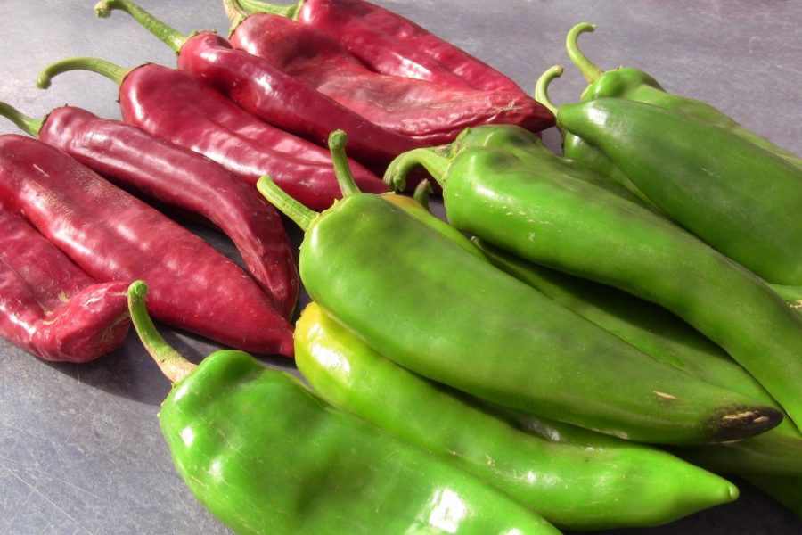 The National Aeronautics and Space Administration will be growing New Mexico Chile in the International Space Stationin 2020.  (Courtesy Photo: NMSU)