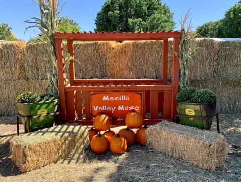 Available attractions at the Mesilla Valley Maze are limited this year. Image courtesy of Mesilla Valley Maze on Facebook.