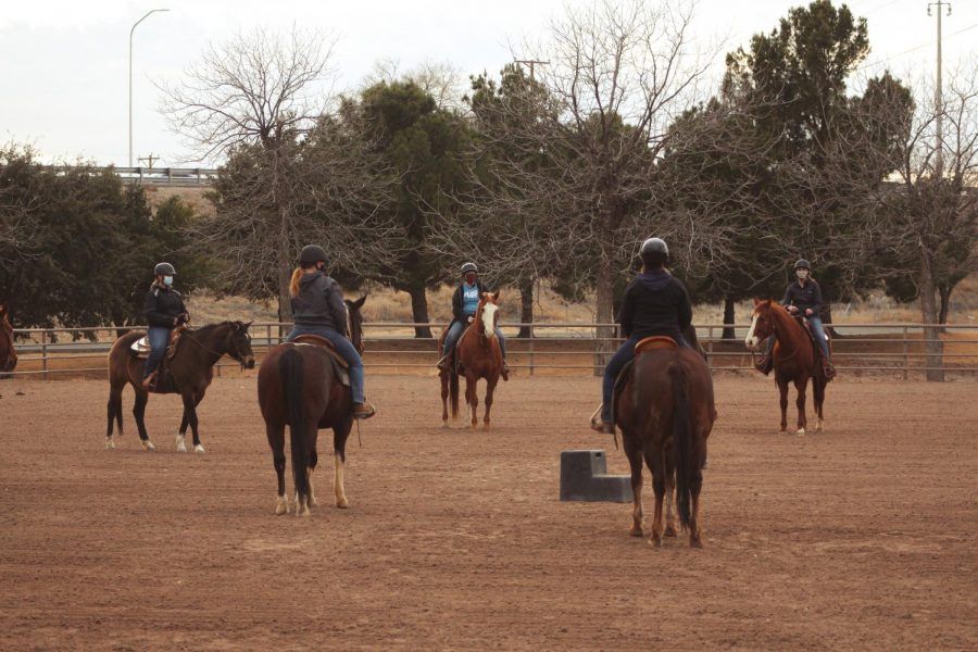 NMSU Equestrian team practices on the west end of campus near the College of Aces on Jan. 30.