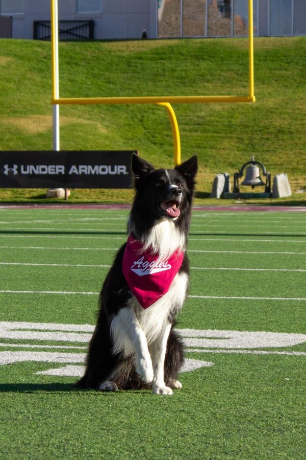 Meet Wave: NMSU newest edition to the Wonder Dog tradition